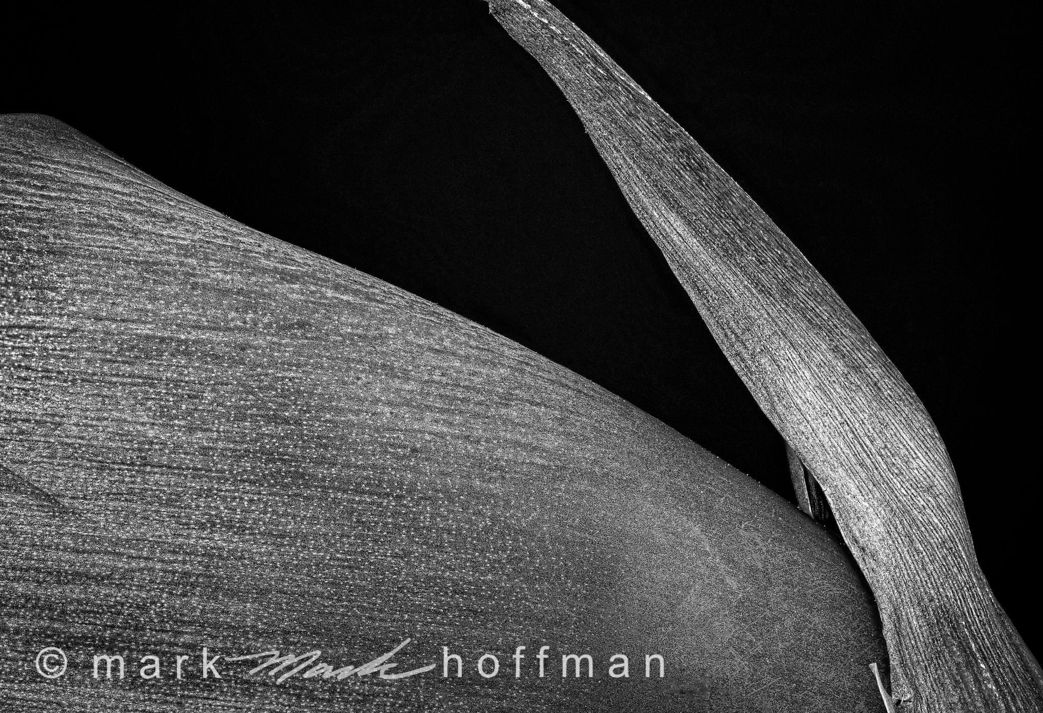 Mark_Hoffman_photophart_20150217_0394to0413_ZSretDM_PSD_2_Psiz_PBW_cap1_var1.jpg