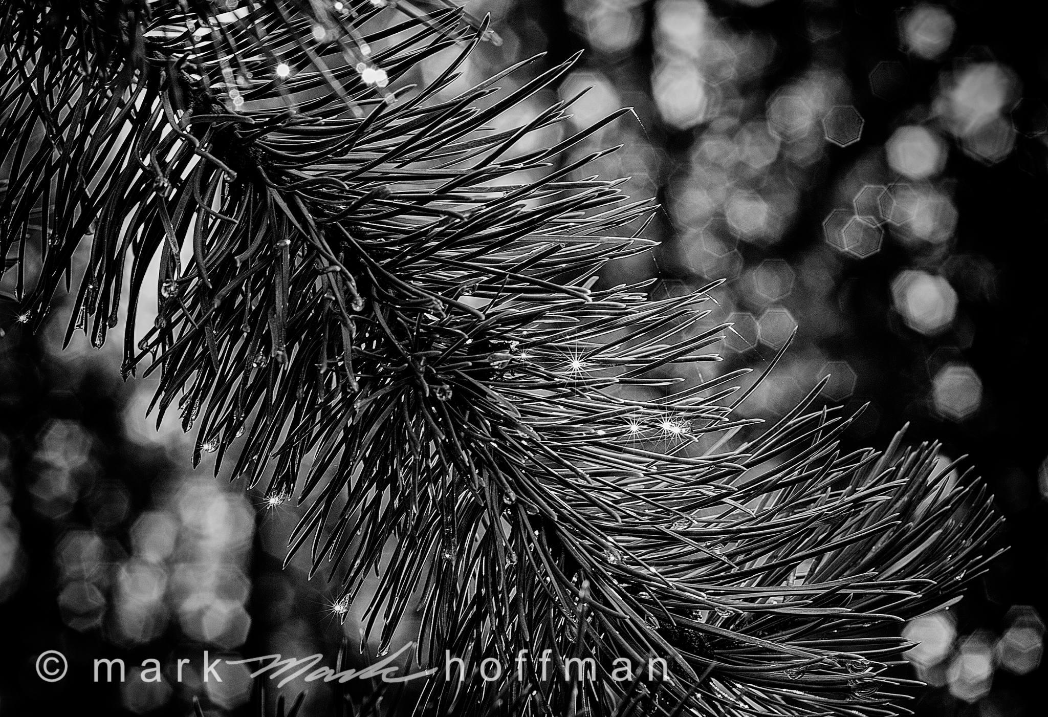 Mark_Hoffman_photophart_20150804_0154_Psiz_Silv.jpg