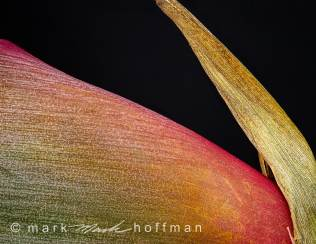 Mark_Hoffman_photophart_20150217_0394to0413_ZSretDM_PSD_2_Psiz-2_cap1_var1.jpg