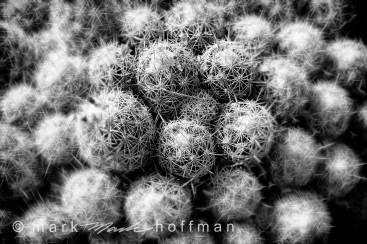 Mark-Hoffman_D4_20121127_0051_silv_silv_cap1_var1.jpg