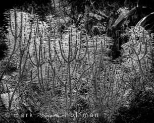 Mark-Hoffman_D4_20121127_0097_silv_cap1_var1.jpg