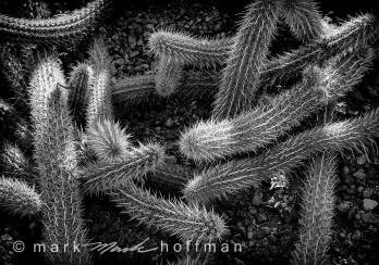 Mark-Hoffman_D4_20121127_0102_silv_cap1_var1.jpg