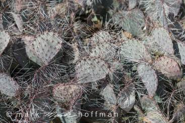 Mark-Hoffman_D4_20121127_0128_cap1_var1.jpg