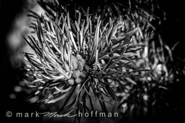 Mark_Hoffman_photophart_20160808_0047_PFX10_Silv_cap1_var1.jpg