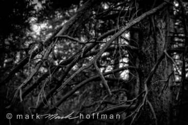 Mark_Hoffman_photophart_20160811_0127_PFX_cap1_var1.jpg