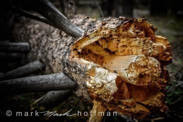 Mark_Hoffman_photophart_20160811_0159_PFX_cap1_var1.jpg