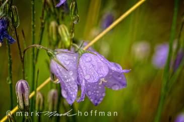 Mark_Hoffman_photophart_20150625_0044_v1_PPORT_cap1_var1.jpg