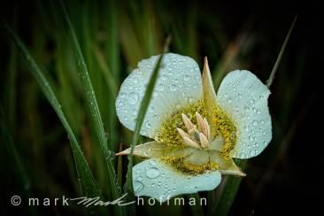 Mark_Hoffman_photophart_20150625_0119_v1_PPORT_cap1_var1.jpg