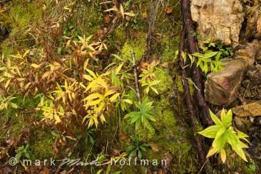 Mark_Hoffman_photophart_20151008_0001_v1_cap1_var1.jpg