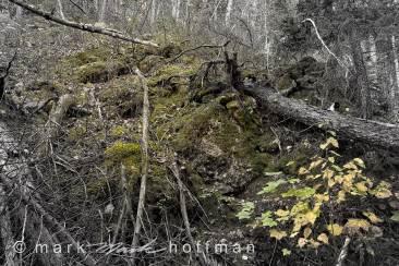 Mark_Hoffman_photophart_20151008_0014_v1_Silv_cap1_var1.jpg