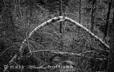 Mark_Hoffman_photophart_20151113_0020_v1_PFX_cap1_var1.jpg