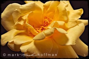 Mark_Hoffman_20140628_115607_ZSretouc_PFX8_exp6_cap1_var1.jpg