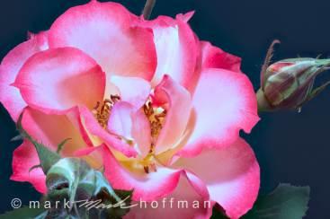 Mark_Hoffman_2014_06_13_143832_ZS_retouc_cap1_var1.jpg