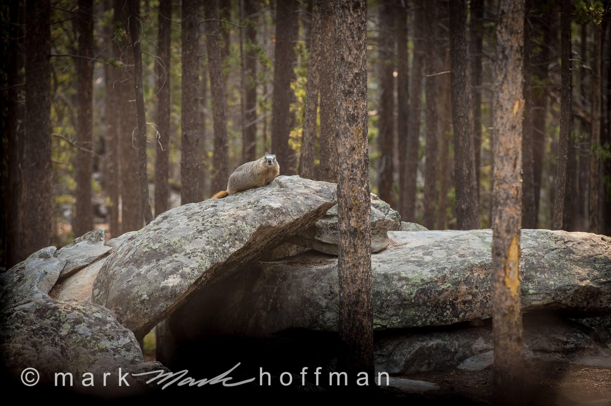 Mark_Hoffman_D4_20120814_0188_cap1_var1.jpg