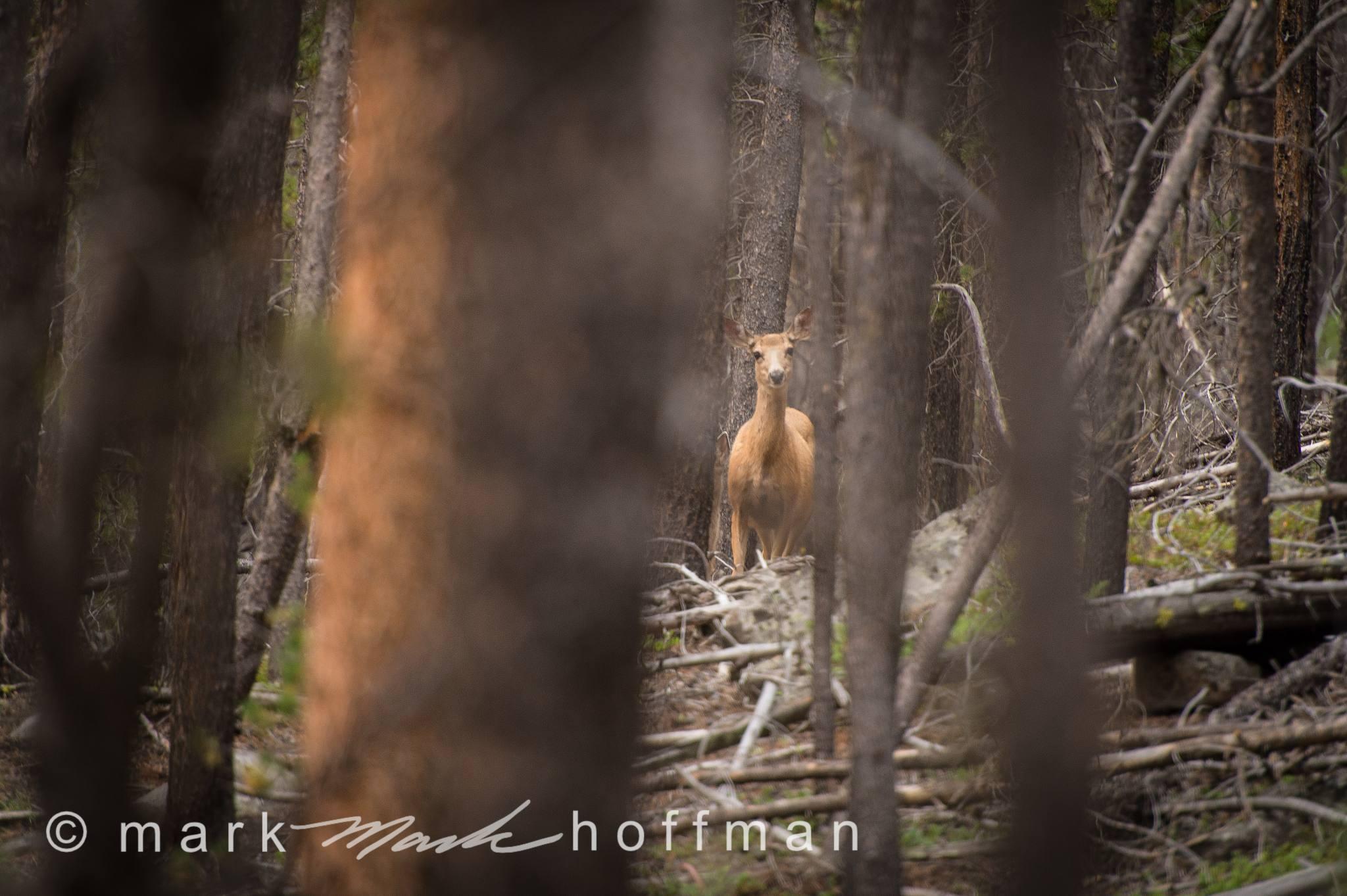 Mark_Hoffman_D4_20120815_0336_cap1_var1.jpg