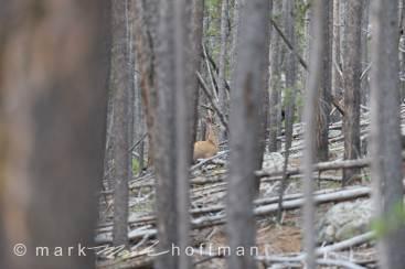 Mark_Hoffman_D4_20120813_0177_cap1_var1.jpg