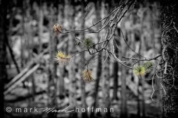 Mark_Hoffman_D4_20120814_0261_cap1_var1.jpg