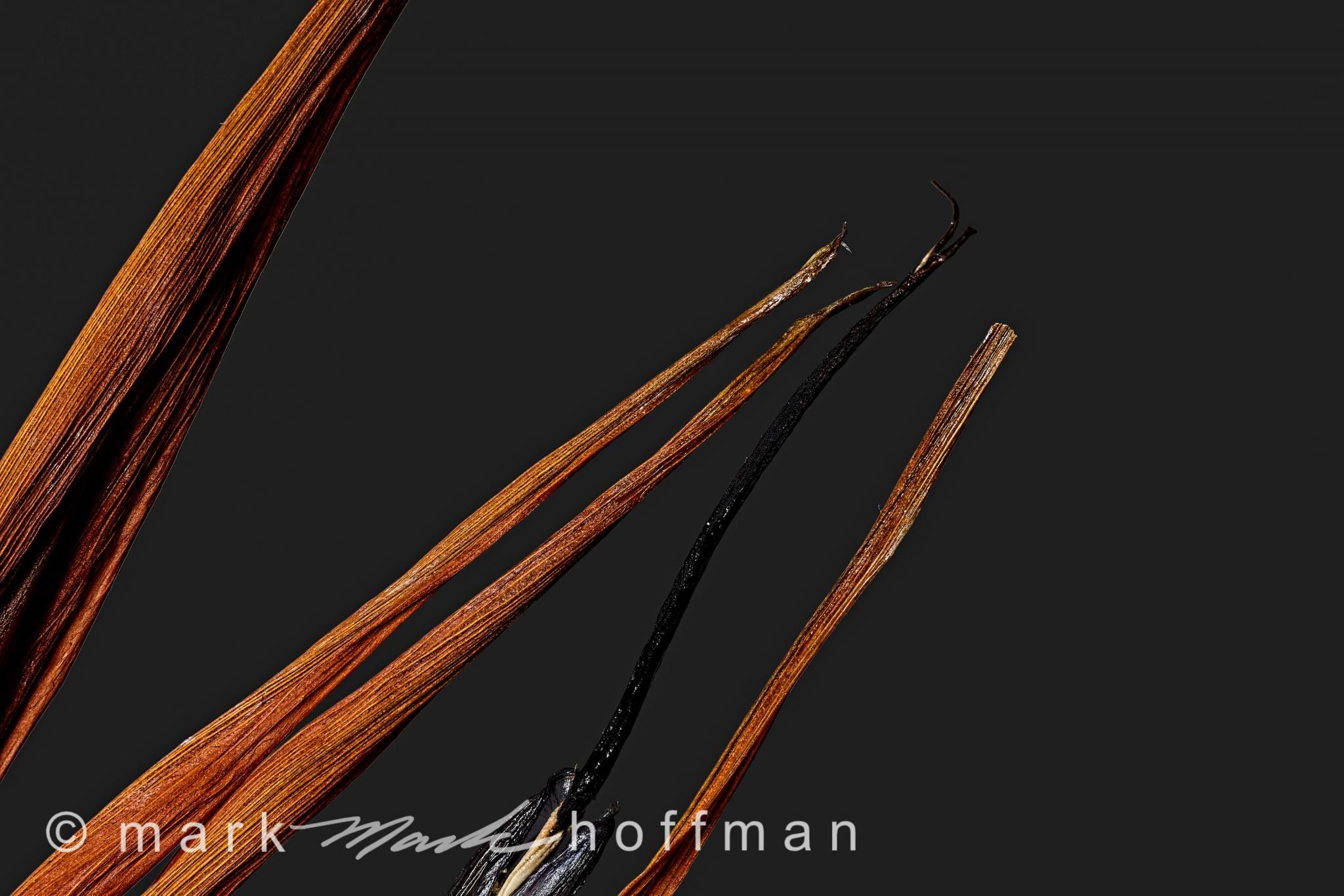 Mark_Hoffman_photophart_20150214_0139to0161_ZSRetDM_TPLum_cap1_var1.jpg