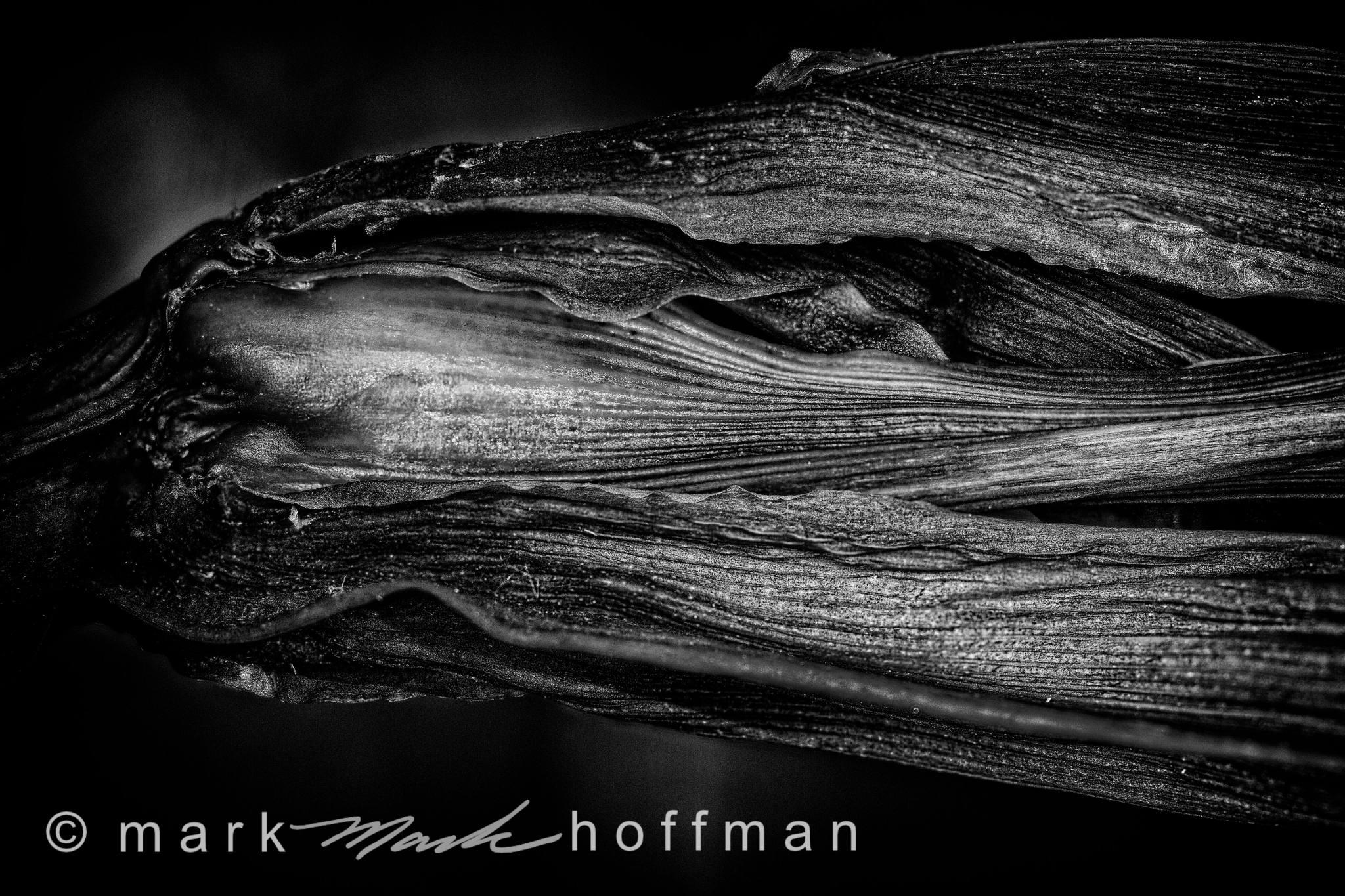 Mark_Hoffman_photophart_20150217_0281to0284_ZSretPM_PFX_Silv_DB_cap1_var1.jpg
