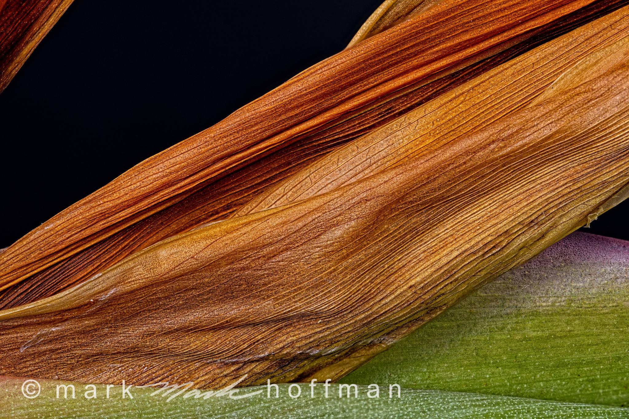 Mark_Hoffman_photophart_20150217_0306to0320_ZSretDM_TPLum_cap1_var1.jpg