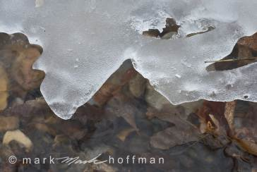 Mark_Hoffman_ND25788_cap1_var1.jpg