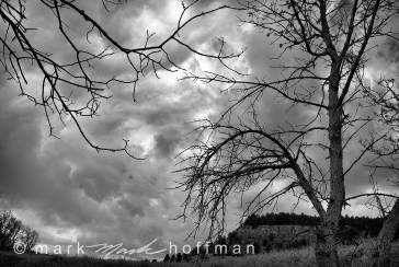 Mark_Hoffman_ND25826_Edit_cap1_var1.jpg