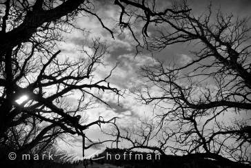 Mark_Hoffman_ND25907_Edit_cap1_var1.jpg