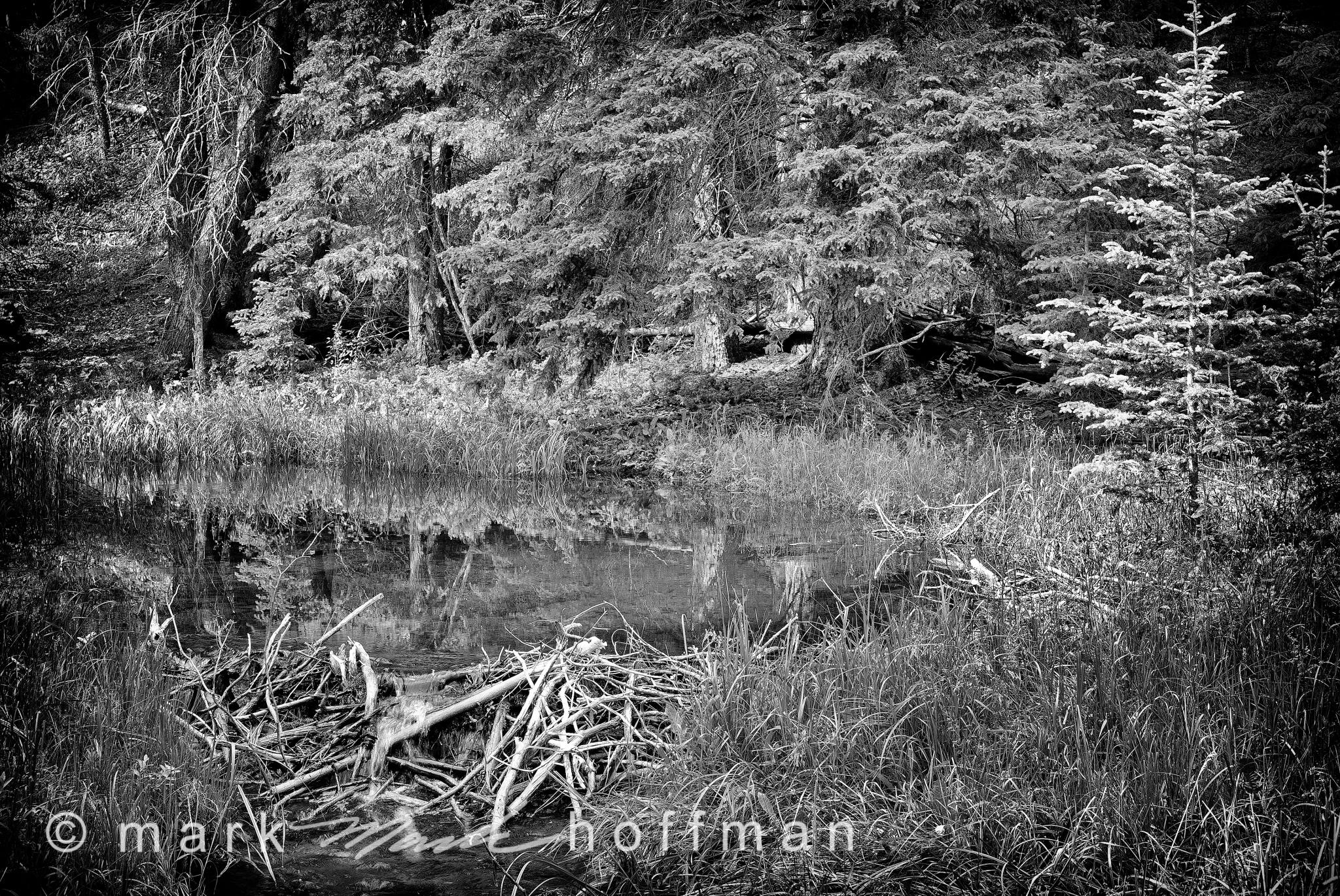 Mark_Hoffman_ND24906-Edit_cap1_var1.jpg