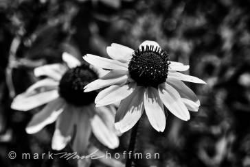 Mark_Hoffman_ND24959-Edit_cap1_var1.jpg