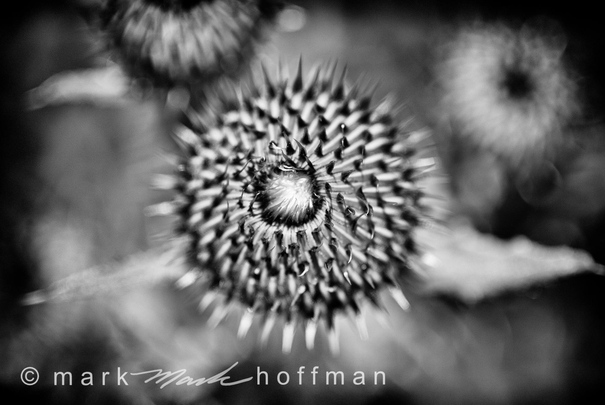 Mark_Hoffman_ND24694-Edit_cap1_var1.jpg