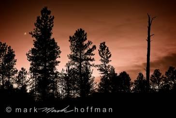 Mark_Hoffman_ND24605_PFX10_cap1_var1.jpg