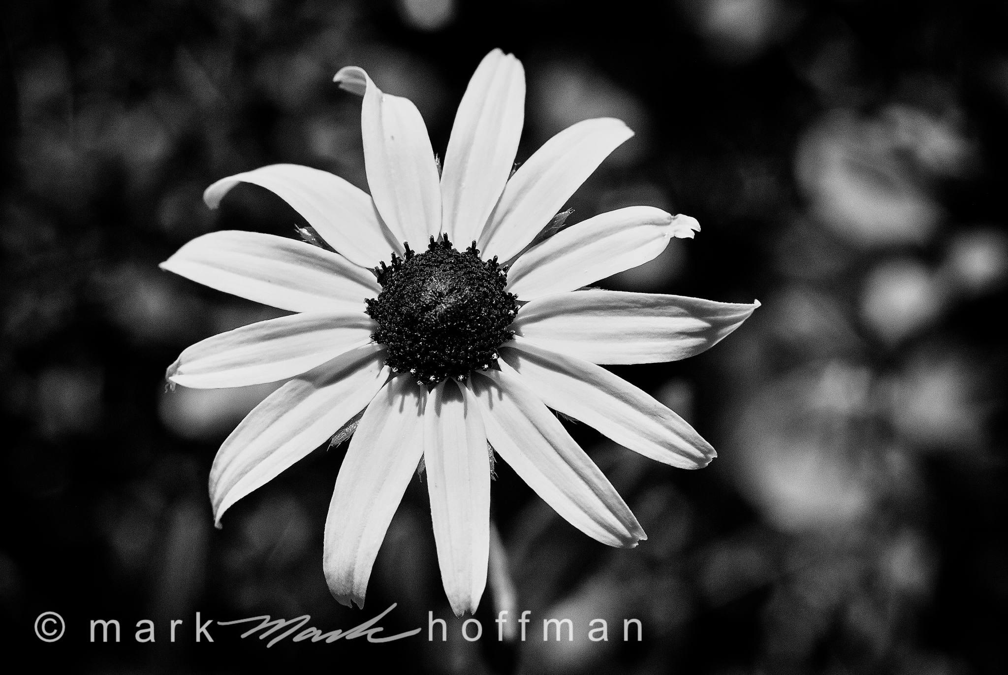 Mark_Hoffman_ND24938-Edit_cap1_var1.jpg