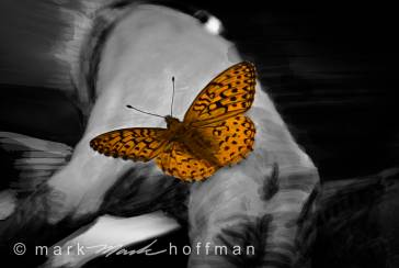 Mark_Hoffman_ND24796-2_cap1_var1.jpg