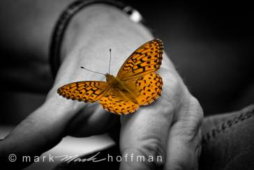 Mark_Hoffman_ND24796_cap1_var1.jpg