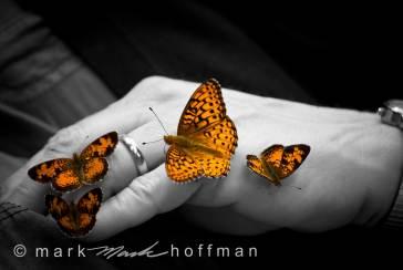 Mark_Hoffman_ND24807-Edit-Edit_cap1_var1.jpg