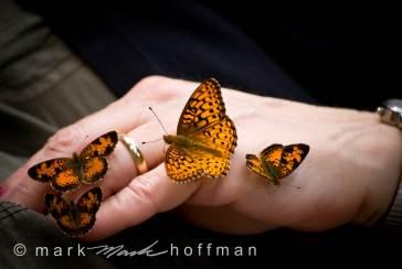 Mark_Hoffman_ND24807-Edit_cap1_var1.jpg