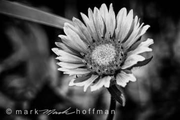 Mark_Hoffman_ND24954-Edit_cap1_var1.jpg