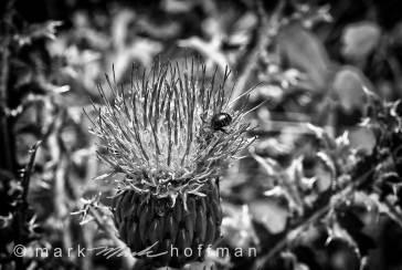 Mark_Hoffman_ND24971-Edit-2_cap1_var1.jpg