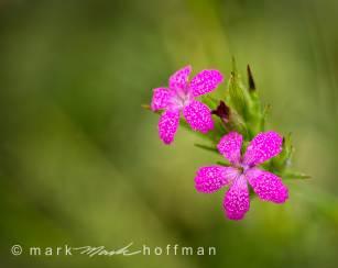 Mark_Hoffman_photophart_20150625_0046_v1_Psiz_cap1_var1.jpg