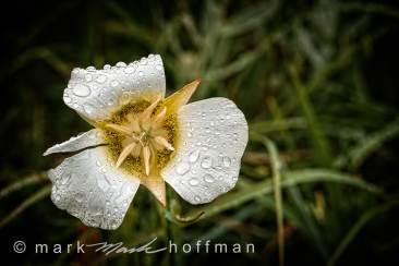 Mark_Hoffman_photophart_20150625_0065_v1_PPORT_cap1_var1.jpg