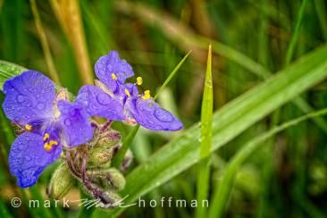 Mark_Hoffman_photophart_20150625_0072_v1_PPORT_cap1_var1.jpg