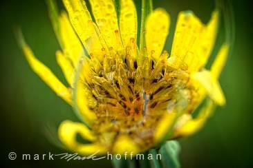 Mark_Hoffman_photophart_20150625_0103_v1_PPORT_cap1_var1.jpg
