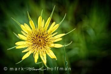 Mark_Hoffman_photophart_20150625_0123_v1_PPORT_cap1_var1.jpg