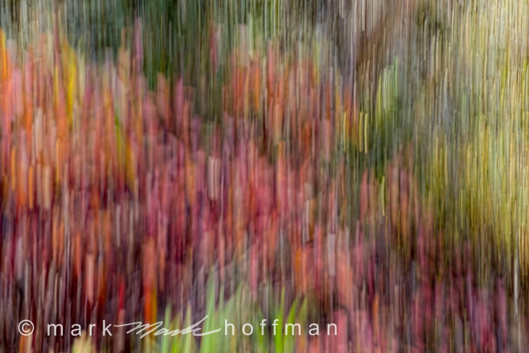 Mark_Hoffman_photophart_20150925_0071_v1_cap1_var1.jpg